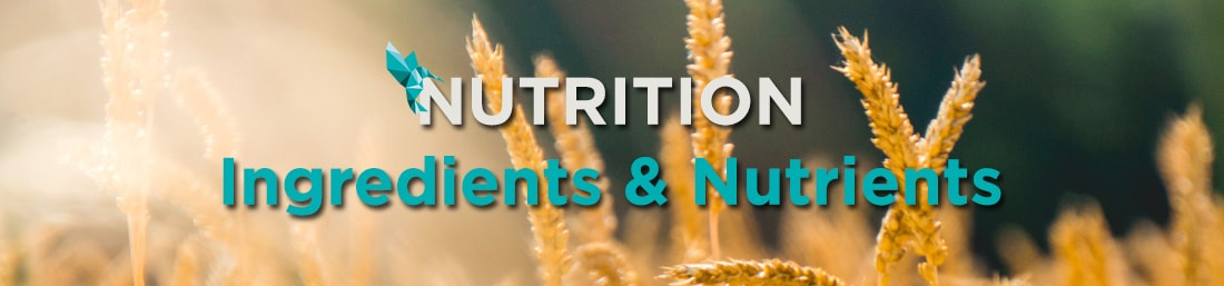 Nutrition Queal