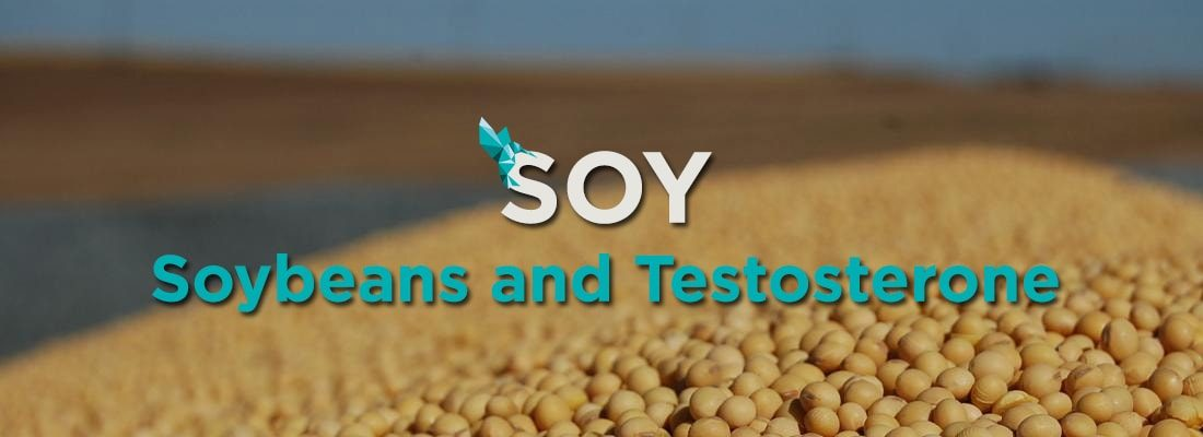 Soy Soybeans Testosterone
